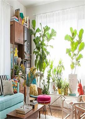 Home decoration idea with plants