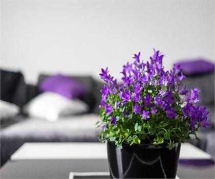 7 plants which will help you sleep better