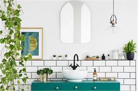 Bathroom Plant: ज्यादा नमी में रहेंगे जिंदा और वातावरण भी...