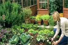 घर में किचन गार्डन बनाने का बेहतर तरीका