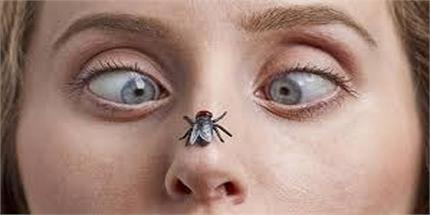 मक्खियों सेे निजात पाने के घरेलु नुस्खे