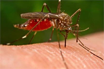 मलेरिया से बचा सकती है वियाग्रा