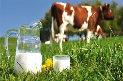 खतरनाक बीमारियों को दूर रखता है गाय का दूध