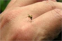 घर के आसपास नहीं फटकेगा एक भी मच्छर, करें आसान उपाय