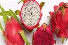 बुढ़ापे से रहना चाहते हैं दूर तो करें इस फल का सेवन!