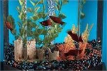 वास्तु टिप्स: घर की इस दिशा में रखें Aquarium!
