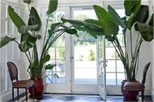 वास्तु टिप्सः घर में लगाएं ये पेड़-पौधे, दिनों-दिन होगी...