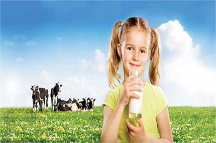 गाय का दूध है सोना, इसके लाजवाब फायदे शायद आप नहीं जानते