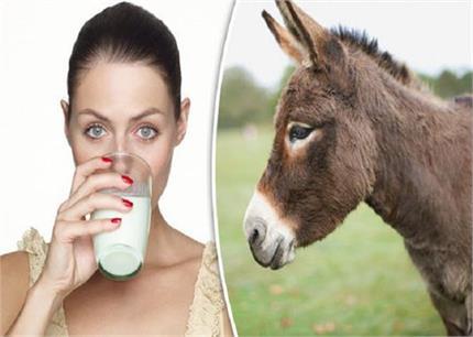 गधी के दूध से होगा इंसानों की बीमारी का इलाज!