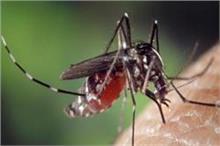 मच्छरों को भगाने के काम आएंगे ये आसान तरीके
