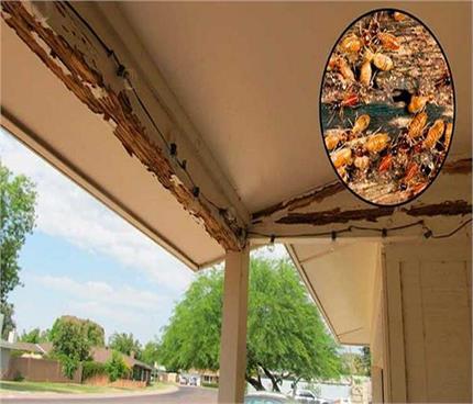 फर्नीचर को दीमक लगने से बचाए रखेंगे ये जादुई टिप्स