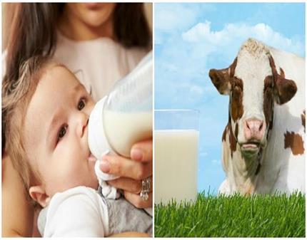 नवजात शिशुओं के लिए खतरनाक है गाय का दूध !