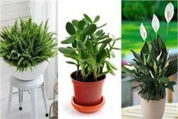 Vastu: सुख-शांति और तरक्की के लिए घर में लगाएं ये पौधे! -Nari