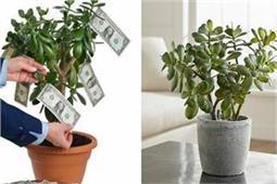 पैसे को चुंबक की तरह अपनी ओर खींचता है यह पौधा!