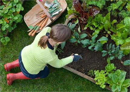 सर्दियों में गार्डन की यूं करेंगे केयर तभी खिले-खिले रहेंगे पौधे
