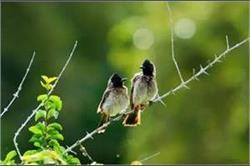Nature को करीब से देखने के लिए बेस्ट है गोवा की यह बर्ड सैंक्चुअरी