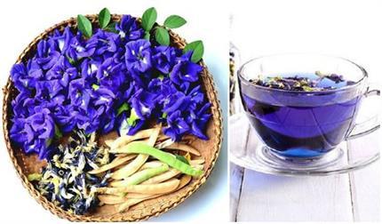 ग्रीन टी से कही फायदेमंद है नीली चाय, सेहत के साथ मिलेंगे कई ब्यूटी...