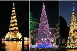 ये हैं दुनिया के 5 सबसे बड़े क्रिसमस ट्री (See Pics)