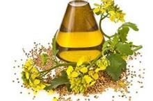 Mustard oil भी है सेहत के लिए बड़ा फायदेमंद, जानिए कैसे?