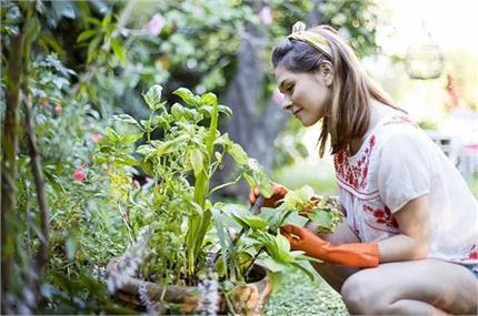 घर में जरूर लगाएं ये पौधे, नहीं होगी पैसों की कमी