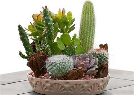 घर में ना लगाएं ये पौधे, आएगी नैगेटिव एनर्जी