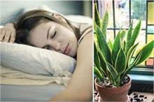 अगर आपको भी नहीं आती अच्छे से नींद तो बैडरूम में लगाएं ये 6...