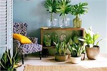 विश्व पर्यावरण दिवस: घर के आस-पास लगाएं ये पौधे, मिलेगा...