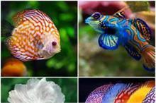 ये हैं दुनिया की सबसे खूबसूरत मछलियां