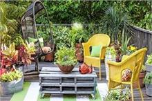 घर में लगाएं ये 5 पौधे, कभी आस-पास भी नहीं फटकेंगे मच्छर
