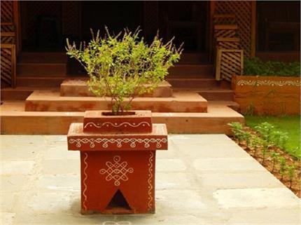 घर में तुलसी का पौधा लगाते समय आपको पता होनी चाहिए ये 5 बातें!