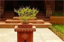 घर में तुलसी का पौधा लगाते समय आपको पता होनी चाहिए ये 5...