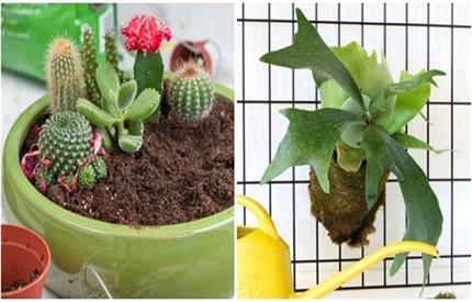 घर के अंदर ना लगाएं ये पौधे, पॉजिटिविटी नहीं फैलाते हैं नेगेटिविटी