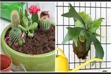 घर के अंदर ना लगाएं ये पौधे, पॉजिटिविटी नहीं फैलाते हैं...