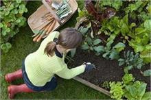 बिना माली के यूं करें अपने किचन गार्डन की देखभाल