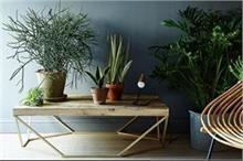 घर में लगाएं दालचीनी का पौधा, मक्खी-मच्छर रहेंगे दूर
