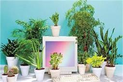 बिजनेस में चाहते हैं तरक्की तो ऑफिस में जरूर रखें यह Lucky Plants