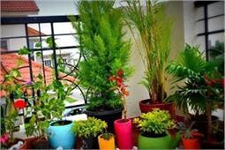 घर में होंगे ये 5 पौधे तो कोसो दूर रहेंगे मच्छर - Nari