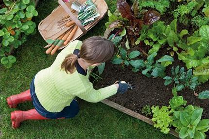 Gardening Tips: अपने किचन गार्डन की यूं करें देखभाल - Nari