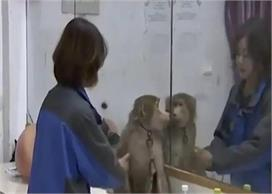 OMG! पासवर्ड ना लगाना पड़ा महंगा बंदर ने की जमकर ऑनलाइन...