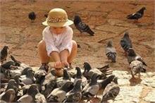 प्यार का पैगाम नहीं, अपने साथ बीमारी लाते हैं कबूतर, रहें...