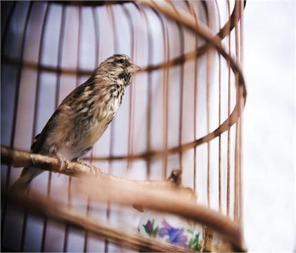 कहीं पिंजरे में कैद पंछी न बन जाए आपकी तरक्की में रुकावट!