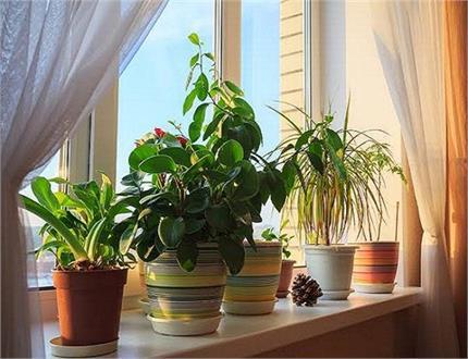 वास्तु के अनुसार जानें कौन-सा पौधा कैसे भरेगा जीवन में रंग?