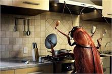 रसोई में बार-बार आ जाते हैं कॉकरोच तो वास्तुदोष हो सकता है...