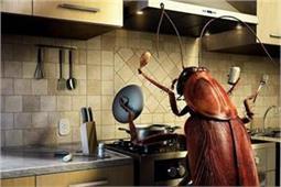 रसोई में बार-बार आ जाते हैं कॉकरोच तो वास्तुदोष हो सकता है कारण