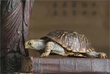 Vastu Tips: सही दिशा में रखें कछुआ, घर में बनी रहेगी सुख-शांति व होगा...