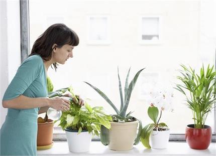 बीमारियों को रखना है अपने से दूर तो राशि के हिसाब से लगाएं पौधे