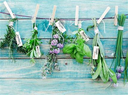 Home Remedies: किचन गार्डन में ही छिपा है इन 10 प्रॉब्लम्स का हल