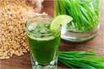 Wheat Grass Juice पीकर घटाएं वजन, मिलेंगे और भी लाजवाब फायदे