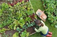 गर्मियों में अपने घर के किचन गार्डन में उगाएं ये 7 सब्जियां