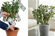 Feng Shui Tips: मनी प्लांट ही नहीं, पैसे को चुंबक की तरह...